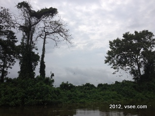 Gabon rainforest